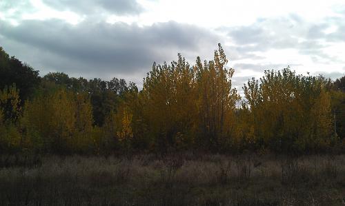 Нажмите на изображение для увеличения Название: Лес с грибами.jpg Просмотров: 140 Размер:64.2 Кб ID:959