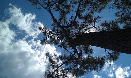Нажмите на изображение для увеличения Название: Сосна и облака на фото.jpg Просмотров: 207 Размер:98.8 Кб ID:1284
