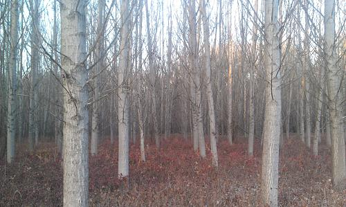 Нажмите на изображение для увеличения Название: Осенний лес.jpg Просмотров: 236 Размер:98.4 Кб ID:998