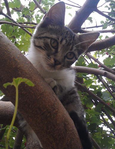 Нажмите на изображение для увеличения Название: Котенок сидит на ветке.jpg Просмотров: 300 Размер:99.8 Кб ID:760