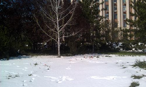 Нажмите на изображение для увеличения Название: Апрель со снегом на юге.jpg Просмотров: 68 Размер:93.6 Кб ID:1483