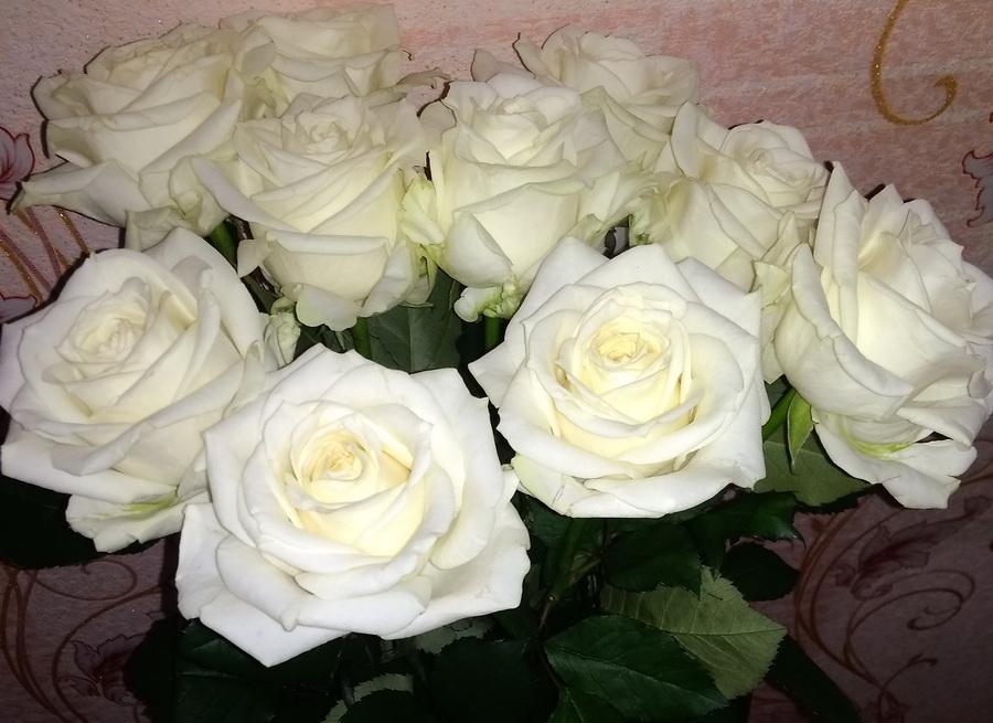 Название: Белые розы зимой.jpg Просмотров: 19  Размер: 185.0 Кб