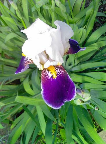 Нажмите на изображение для увеличения Название: Foto-Iris.jpg Просмотров: 316 Размер:86.8 Кб ID:1441