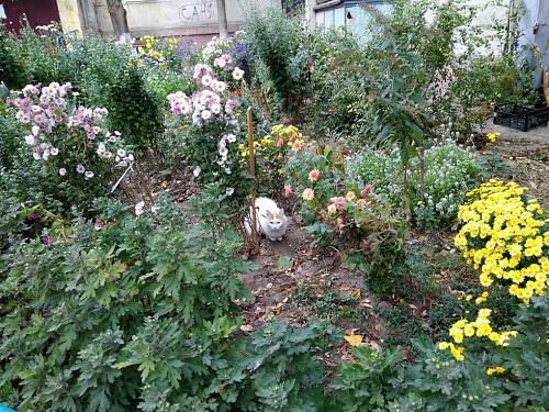 Нажмите на изображение для увеличения Название: Белая кошка в цветах.jpg Просмотров: 7 Размер:371.5 Кб ID:2785